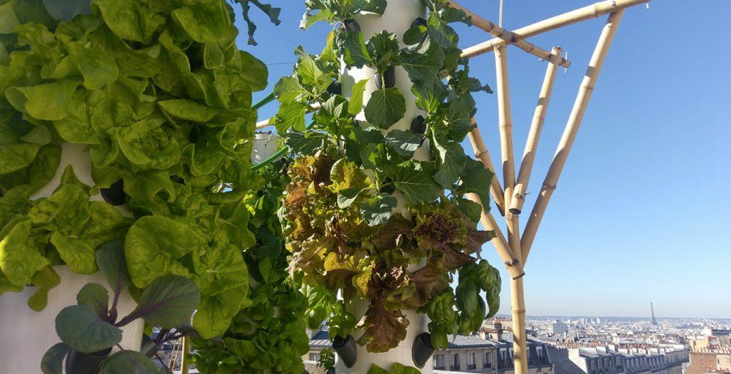 L'agriculture urbaine sur les toits de Paris