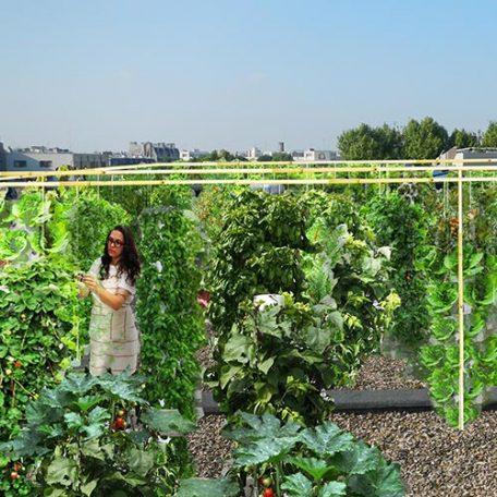 Service global d'agriculture urbaine