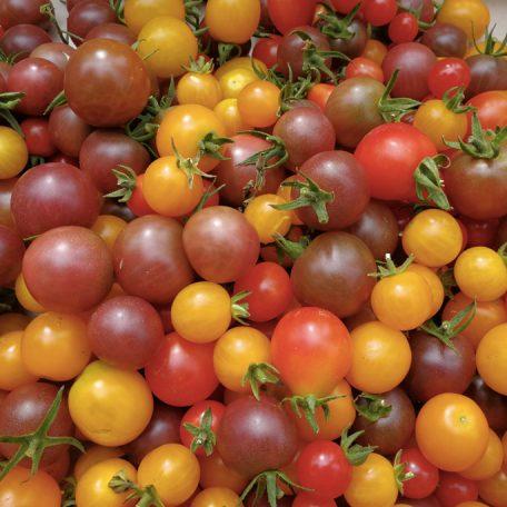 tomates cerises agriculture urbaine