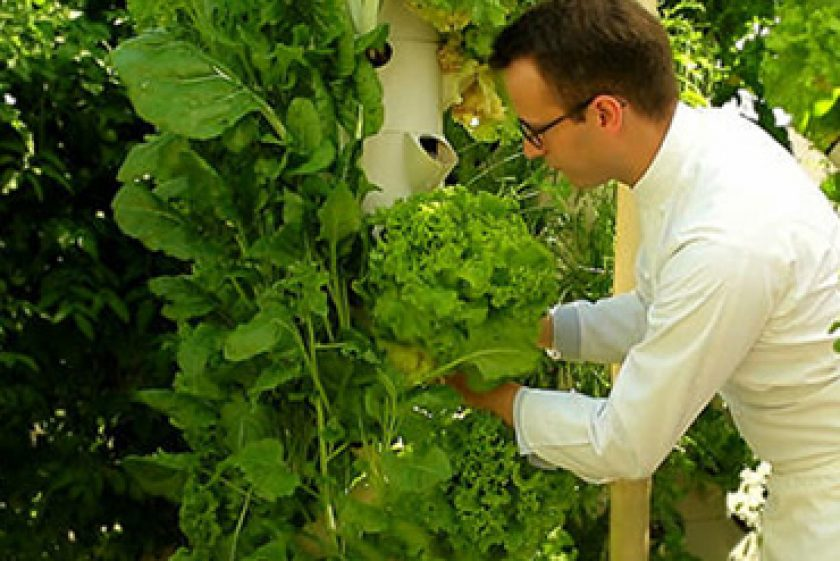 « First Aeroponic Farm At Paris Hotel Yields Harvest »