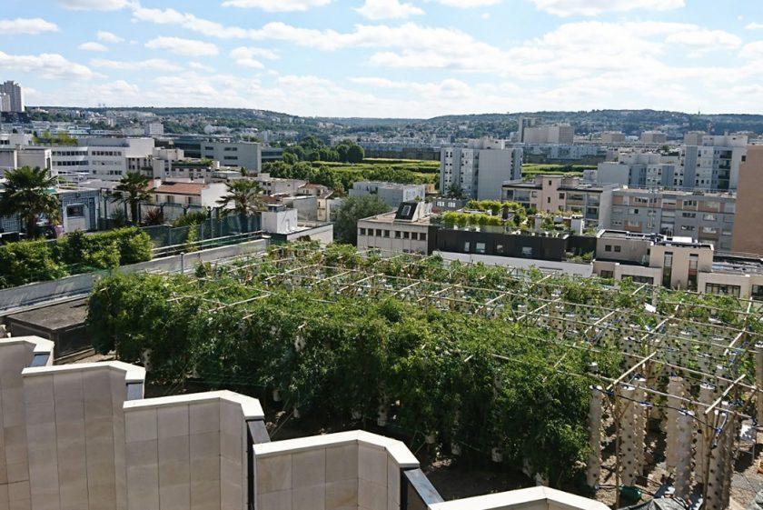 Vous avez un toit ?  Installez une ferme urbaine !